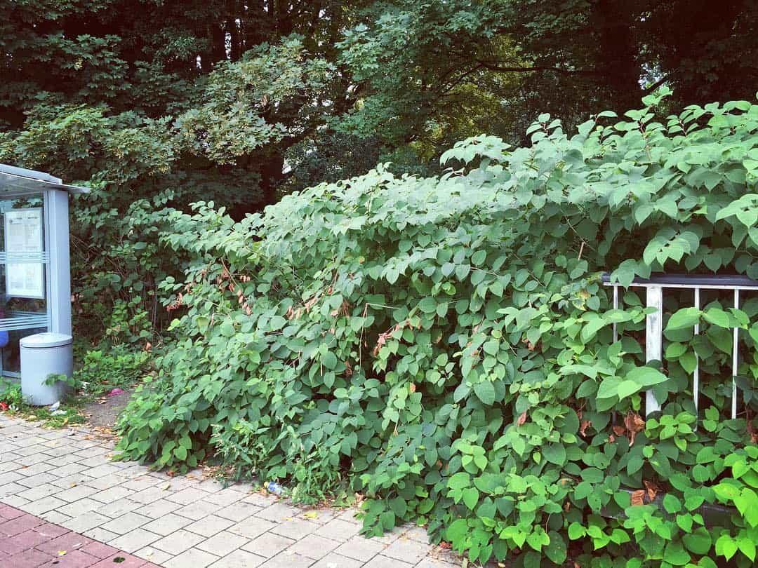 Wandel via het pad rechts van het bushokje