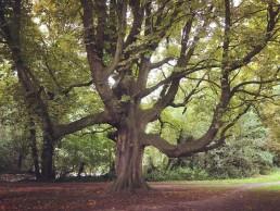 Park De Vijvers